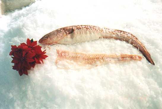 Clip Art King Clip king clip fish productsargentina supplier fillet