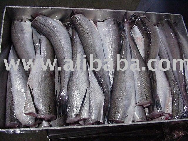 Hake/Whiting (Merluccius productus)