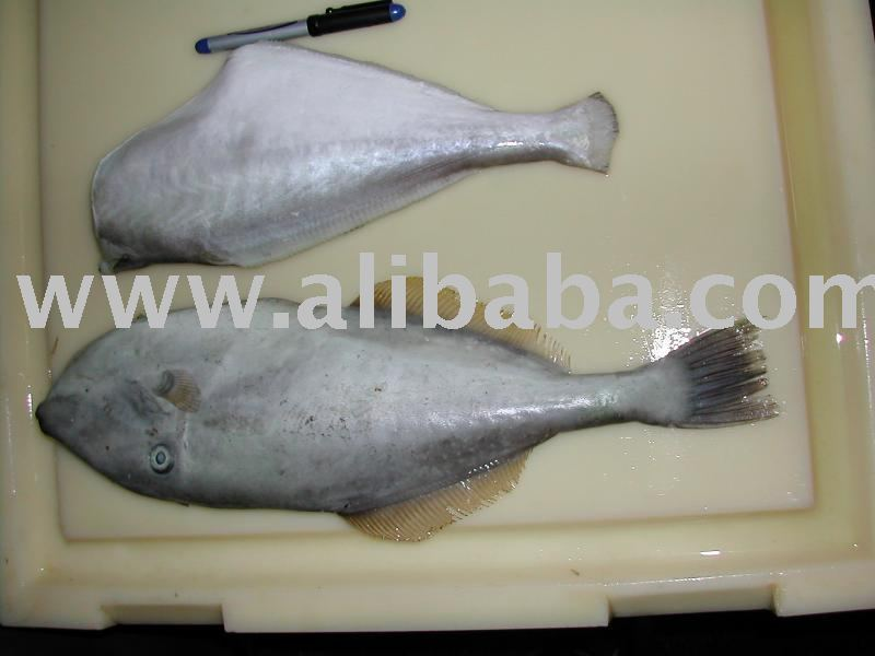 Leather jacket fish suppliers exporters on for Leather jacket fish