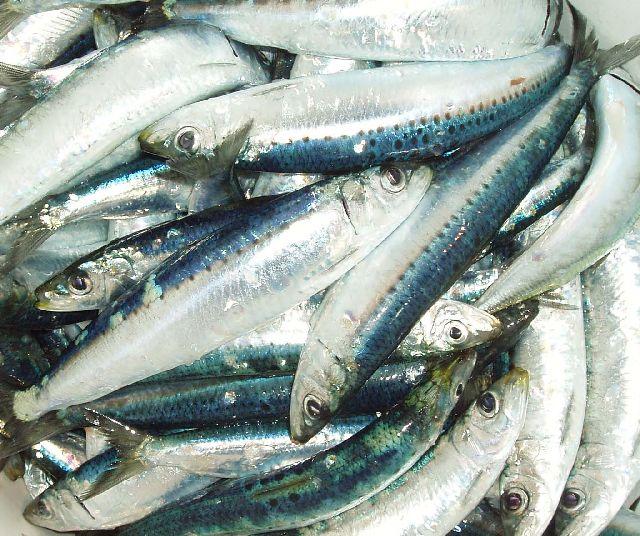 Sardines nz