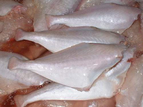 Frozen Leather Jacket Fish H & G, Skinless, Tail Off ...