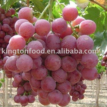 2010 Китайский свежий красный глобус виноград