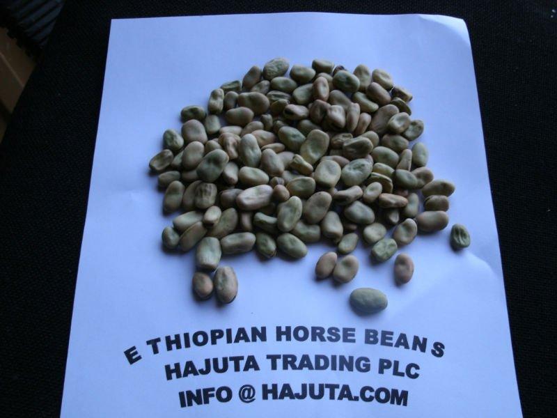 ETHIOPIAN HORSE  BEANS