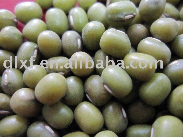 Green beans/Mung bean
