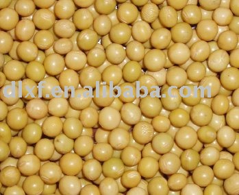 the origin of the soybean Watch video  the trade war may have just started, but china has already been making moves in the soybean world as us shipments originally destined for the nation have been canceled or rerouted.