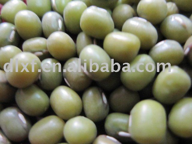 Green bean/mung bean