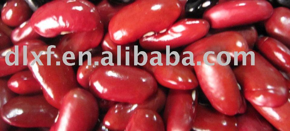 Kidney Bean/red kidney beans