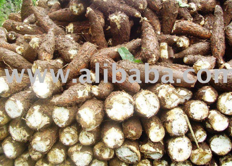 Cassava Fresh