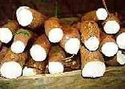 ARROW ROOT ,yam,cassava
