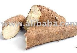 Dried Tapioca Chip (Cassava)