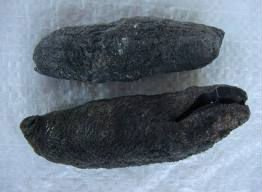 STONE FISH SEA CUCUMBER