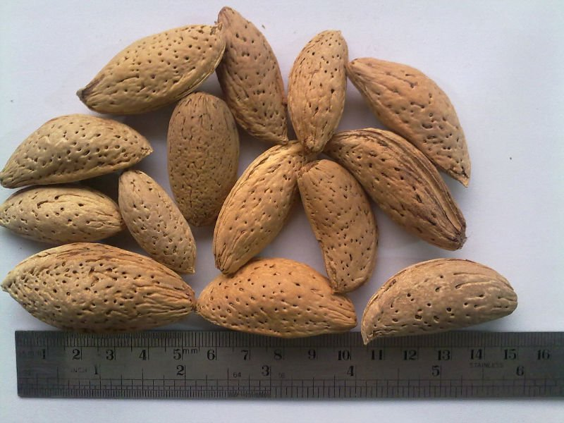 Dryfruit Almond in soft shell