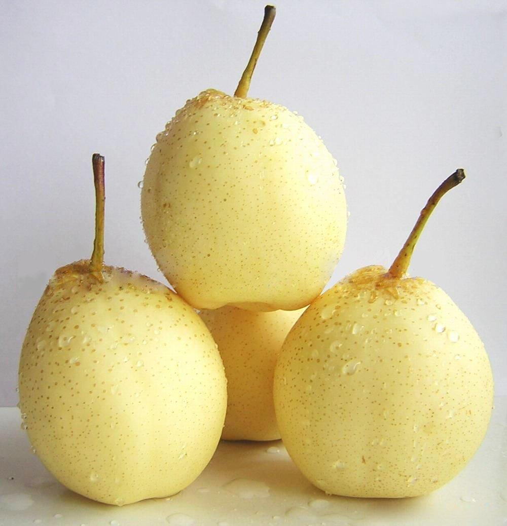 ya pear products china ya pear supplier