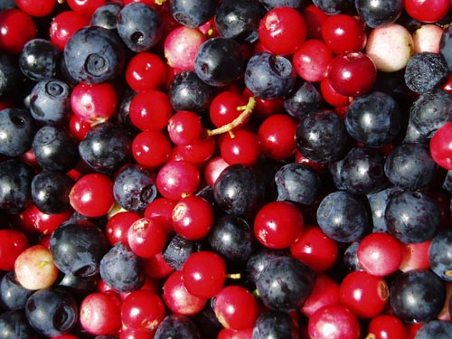 Aronia Juice Concentrate
