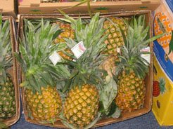 Tropical And Exotics Fresh And Frozen Fruits