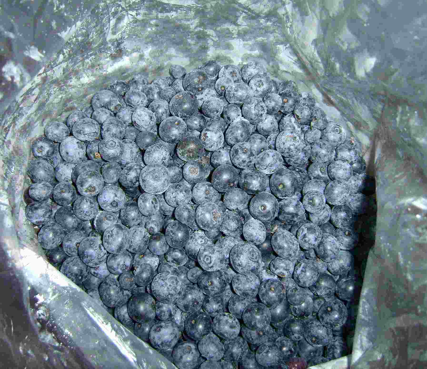 IQF Blueberry (Tk-Kulturheidelbeeren) Argentina