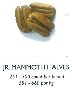Pecan Jr Mammoth Halves
