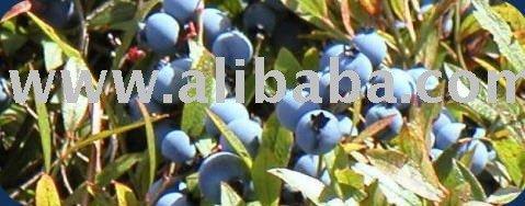 IQF Wild Blueberries