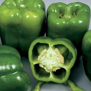 Colossal Sweet Pepper Plant