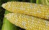 red corn sugar for sale