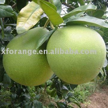 fresh  sweet   pomelo   fruit