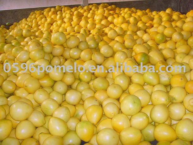 China citrus fruit pomelo