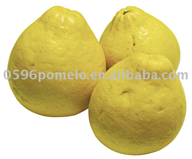 Citrus fruit-Shatian pomelo