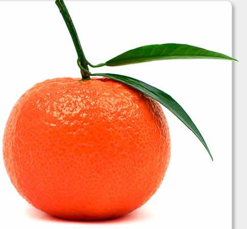 Fresh Mandarina