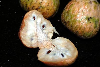 Fresh Custard apple for sale