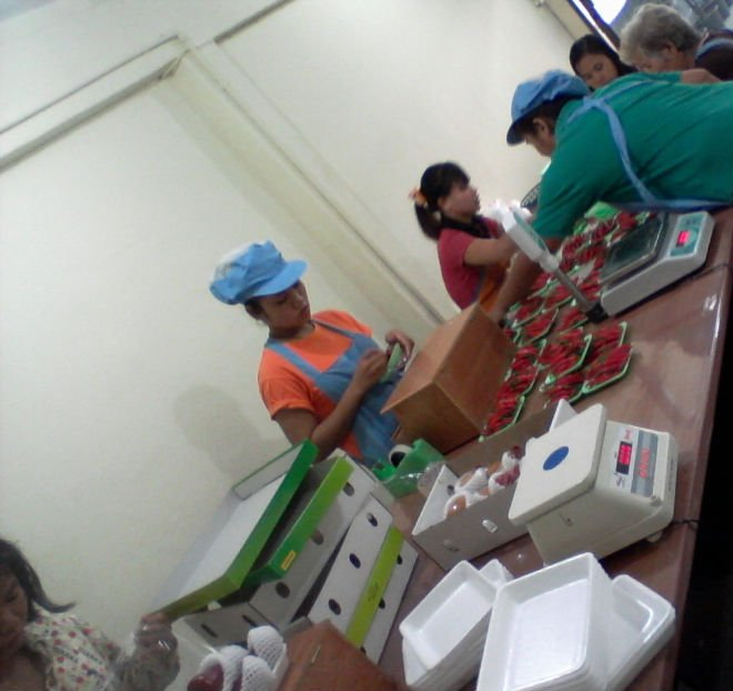 Thailand Fruit Wholesaler Email Mail: Packaging For Fruits Products,Thailand Packaging For