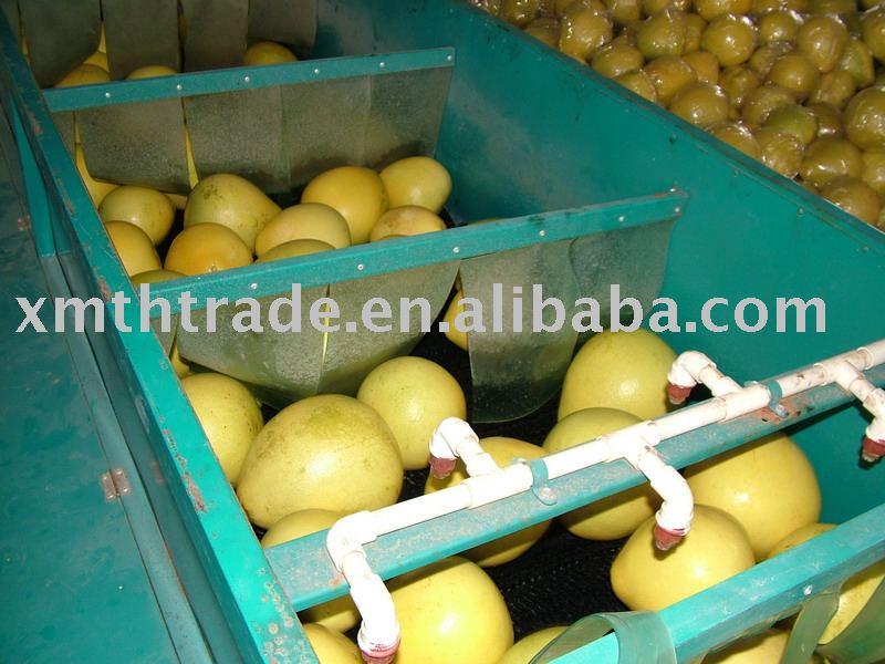 citrus ( pomelo )