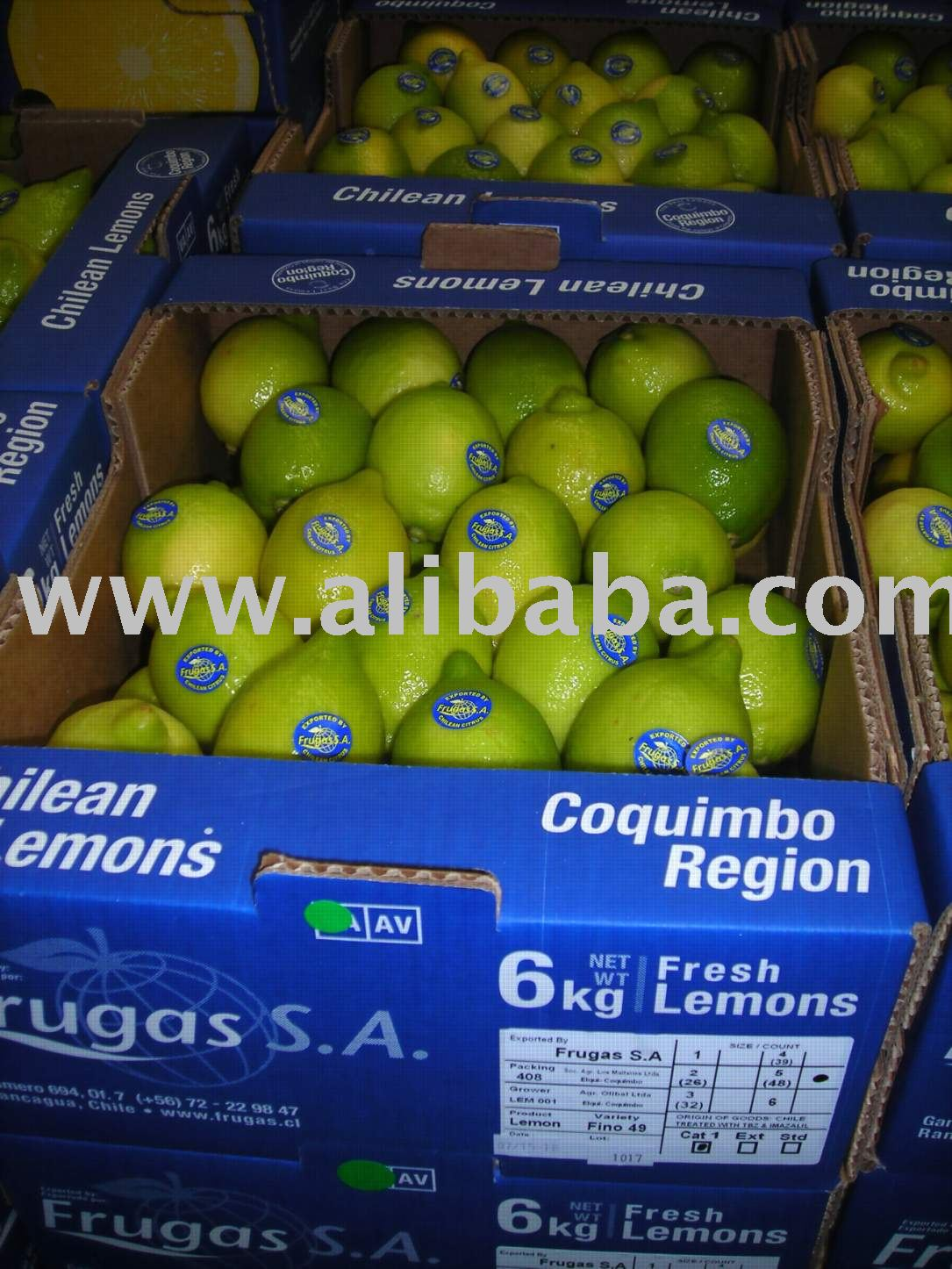Kiwi Fruits 3 2 Kg Products Chile Kiwi Fruits 3 2 Kg Supplier
