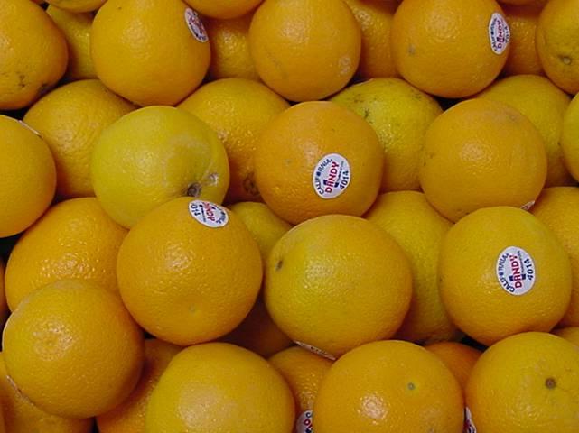 Oranges Egypt