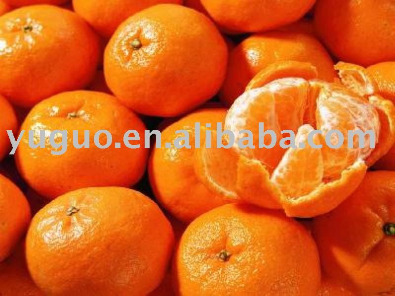 canned oranges/whole mandarin oranges segments in an opened tin