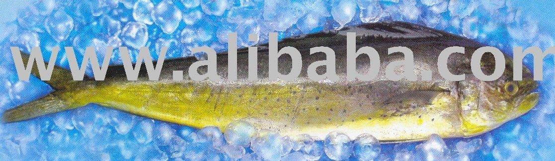 Mahi Mahi aquatic food