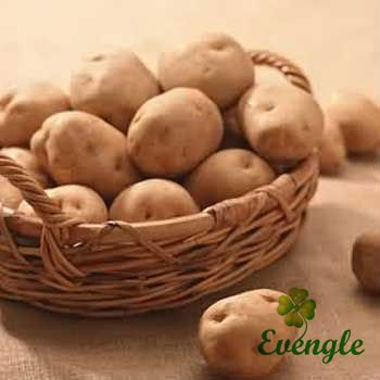 Fresh Potato/Best Quality/Organic