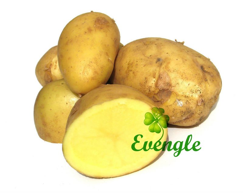 Fresh Potato/Best Quality/Best Taste
