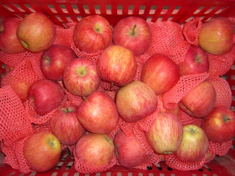 Pind Lady Apple Products China Pind Lady Apple Supplier