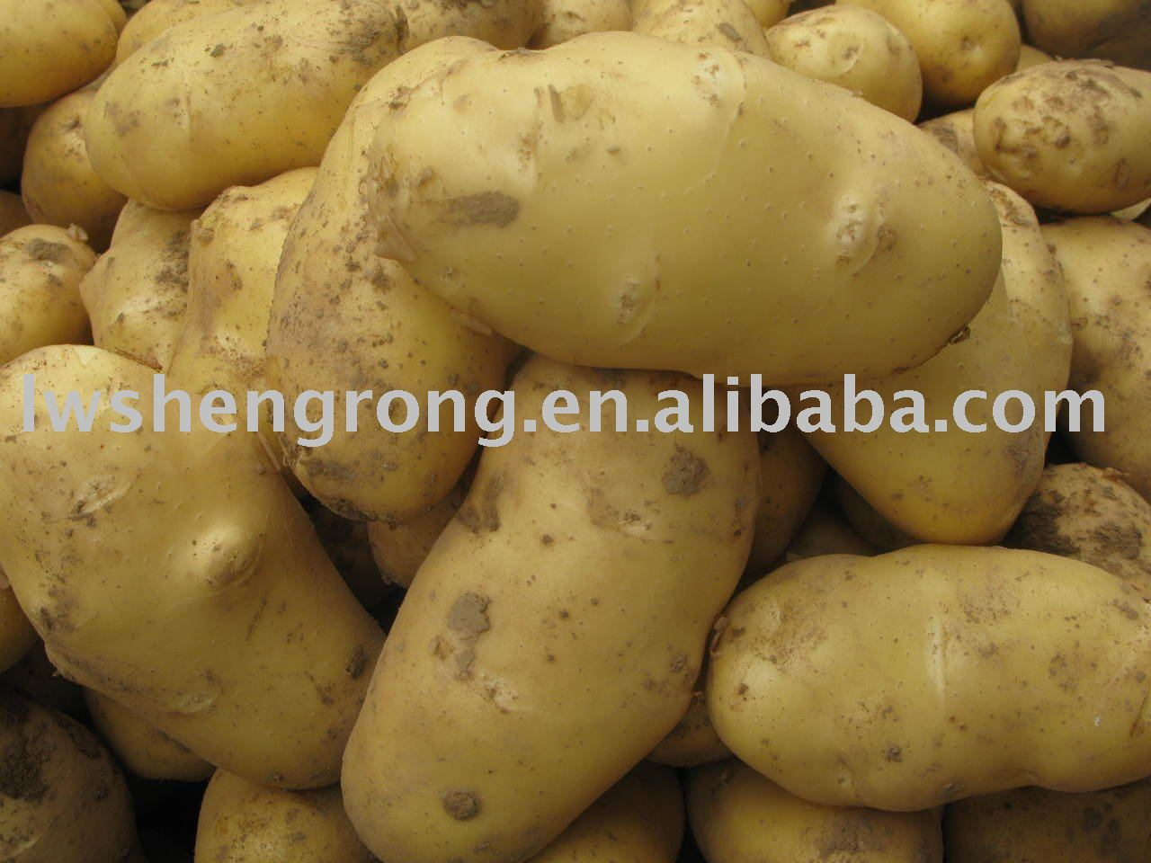 Fresh Potato,chinese potato,2010 potato