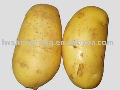 Fresh Potato,chinese potato
