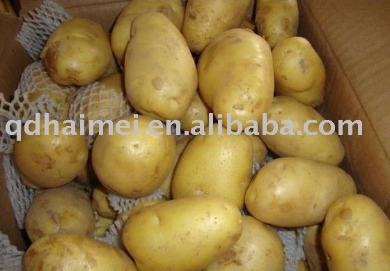BEST QUALITY fresh  potato NEW CROP 2011