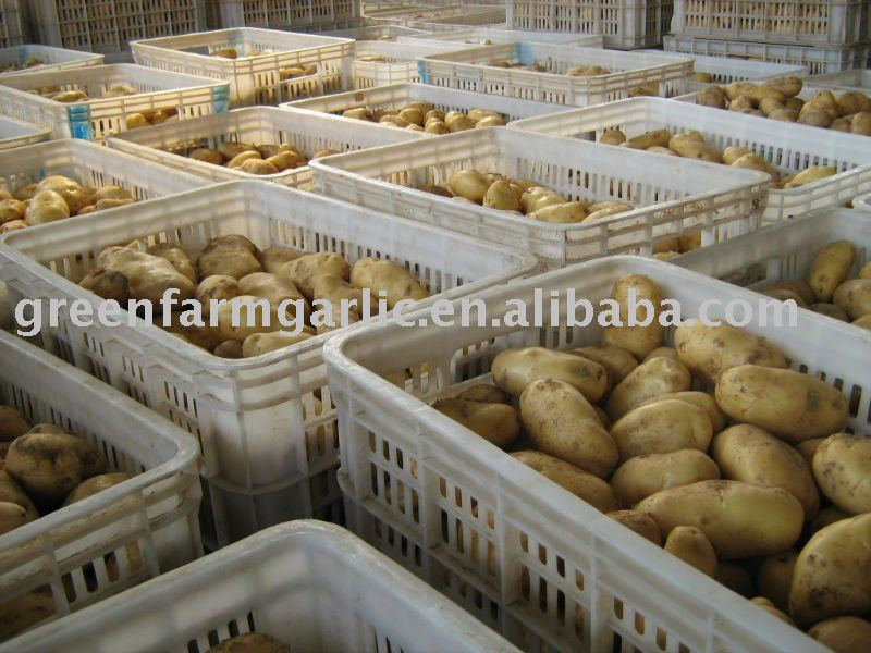 2011 Best Quality Fresh Holland  Potatoes In China
