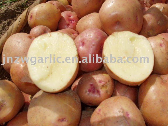 200g 2010 fresh potato   kentang