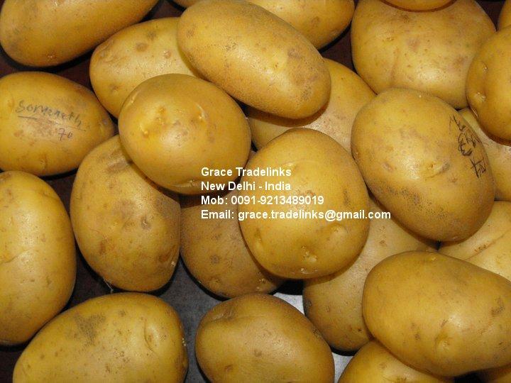 Fresh Indian Potato (Spunta / Nicola) FRESH WHITE POTATO / INDIAN POTATO / SUGARFREE POTATO / TABLE