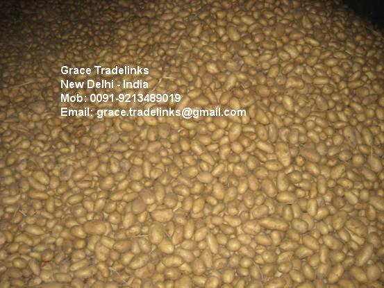 Fresh Indian Potato ( Kufri 3797, Chipsona, 5857)