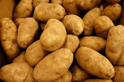Russet Potatoes We are very much willing and able to supply you wit ...
