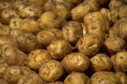 fresh irish potatoes