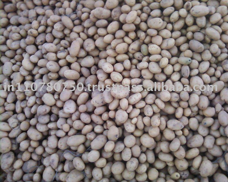 Cheap Indian Fresh Potatoes