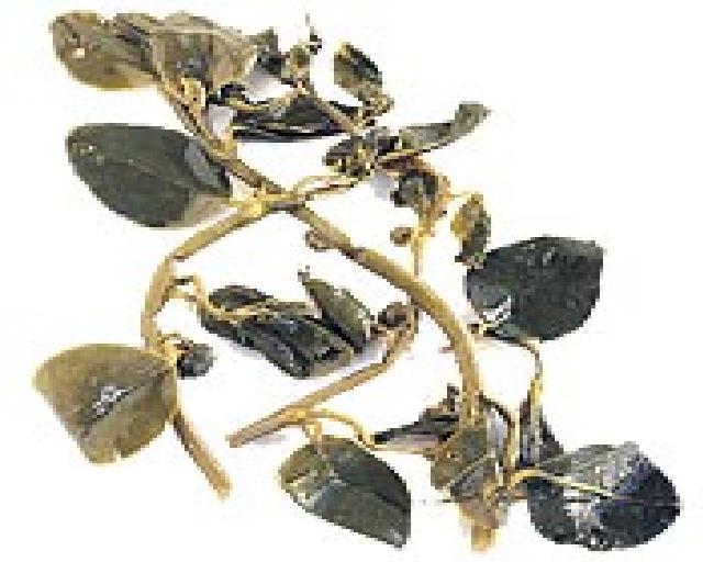 Greek Pickled Caper Leaves
