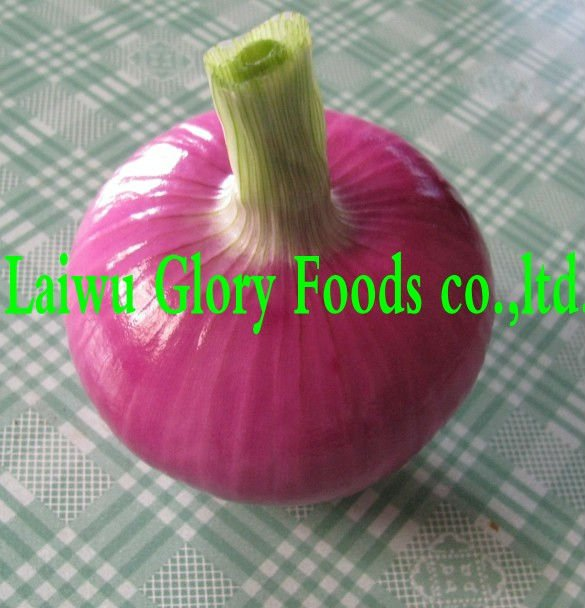 onion,fresh onion,red onion